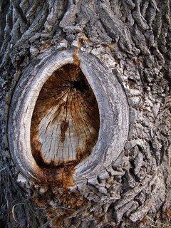 FOTKA - starý strom u rybníka_Buštěhrad
