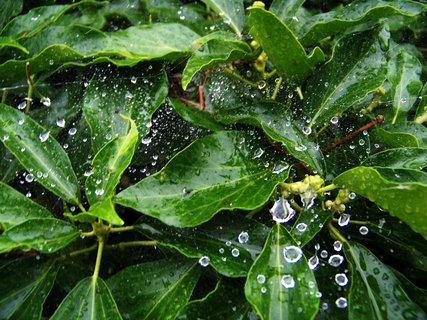 FOTKA - zahrada po dešti - pavučiny