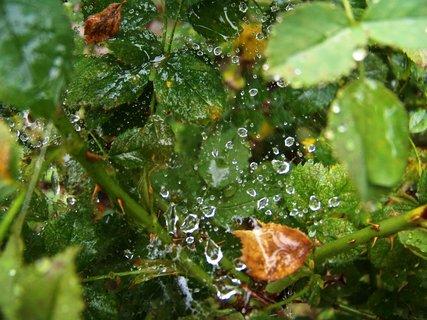 FOTKA - zahrada po dešti .,,,,,