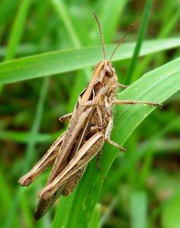 FOTKA - Krásné tělo kobylky