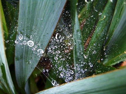 FOTKA - pavučinky na zahradě po dešti .,,