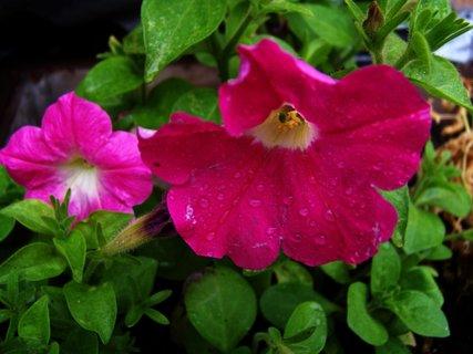 FOTKA - květy po dešti.,,,