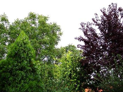 FOTKA - zahrada z balkónu..