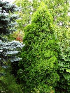 FOTKA - zahrada Buštěhrad ....