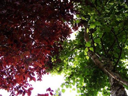 FOTKA - zahrada, stromy vedle sebe..