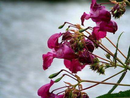 FOTKA - - kvítka u řeky