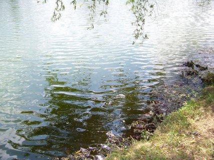 FOTKA - vlnky u břehu rybníka, Buštěhrad