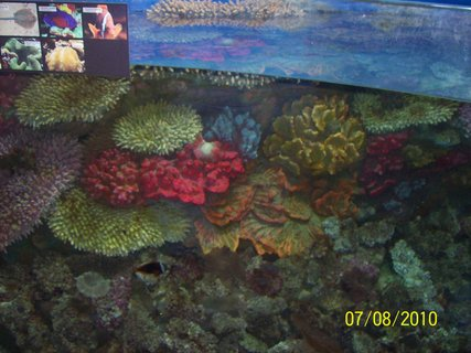 FOTKA - akvárium v zoo 2