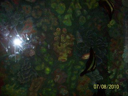 FOTKA - akv�rium v zoo 4