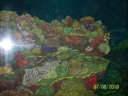 FOTKA - akvárium v zoo 5