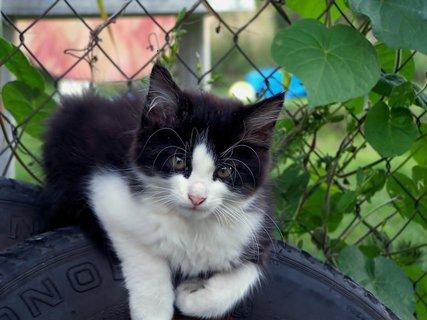FOTKA - Kočičí pohodář Bohoušek