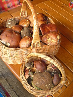 FOTKA - houbičky z lesa