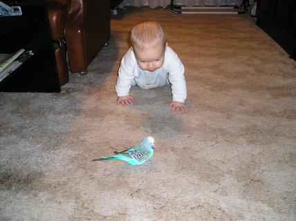 FOTKA - A takhle jsem si hr�l s na��m papou�kem