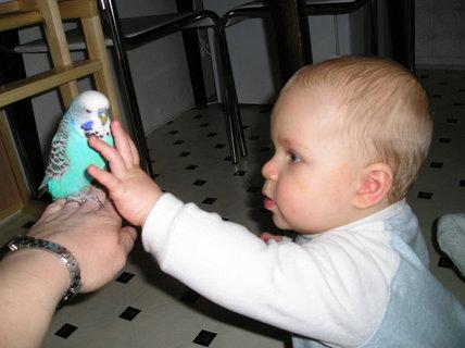 FOTKA - Takhle jsem si našeho anduláčka ochočil a mazlil se s ním
