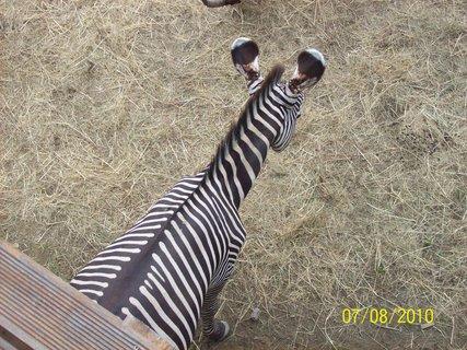 FOTKA - Museli sme isť na zebru, aby sme ju videli