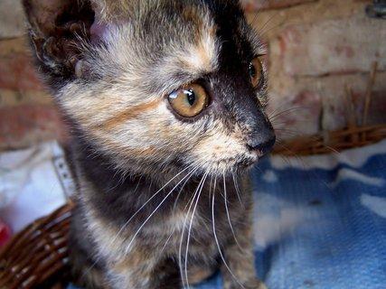 FOTKA - Kočičí kukuč