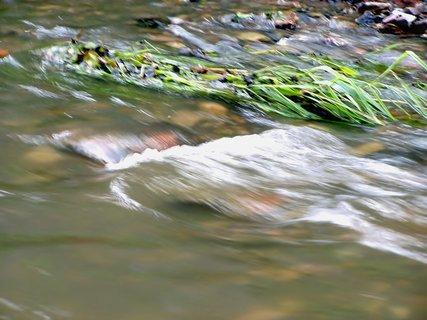 FOTKA - Voda je živel