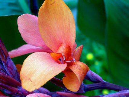 FOTKA - Květ kany