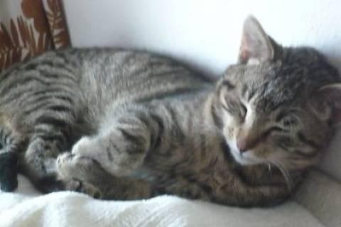 FOTKA - Takhle dřímá naše kočka