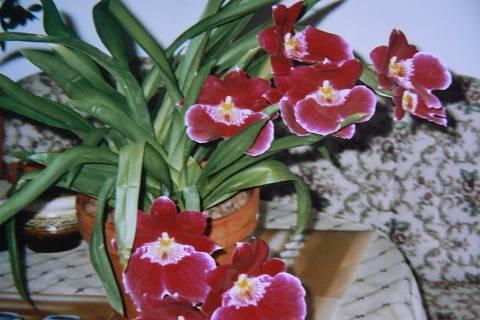 FOTKA - orchidej 6