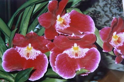 FOTKA - orchidej 7