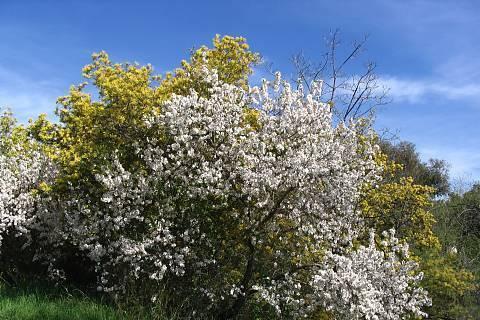 FOTKA - Jaro v plnem proudu