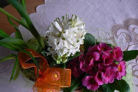 FOTKA - bílý hyacint v košíku
