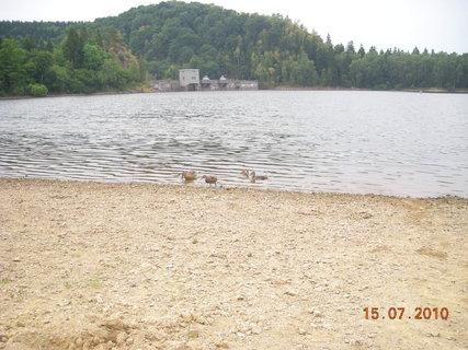 FOTKA - kachny na přehradě
