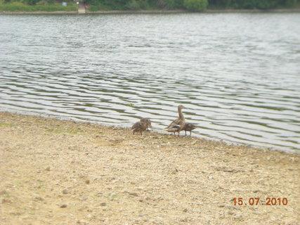 FOTKA - kachny na přehradě..