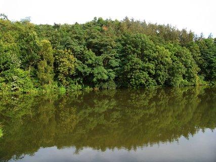 FOTKA - odrazy stromů na hladině _Kunratice