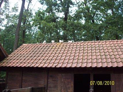 FOTKA - aj holuby maju v zoo