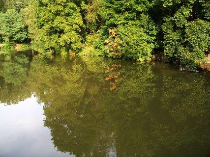 FOTKA - rybník po deštích_ Dolnomlýnský,. hladina se stromy