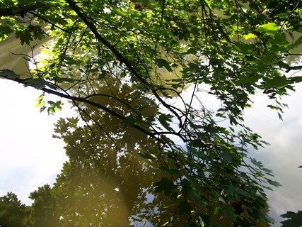 FOTKA - rybník po deštích_ Dolnomlýnský-javor nad vodou