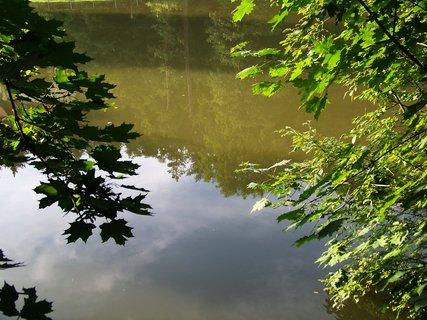 FOTKA - rybník po deštích_ Dolnomlýnský-mezi stromy