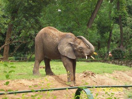 FOTKA - Sloníča