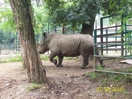 FOTKA - Nosorožec vo výbehu