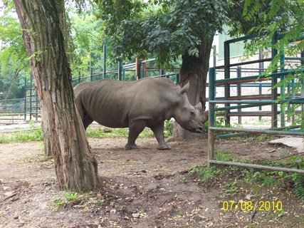 FOTKA - Nosorožec vo výbehu 2
