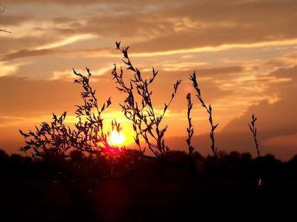FOTKA - Sluníčko na větvičce