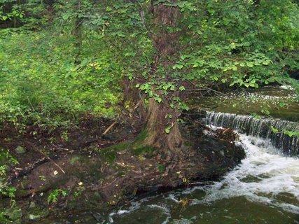 FOTKA - cestou na kole-průhonický park_strom u břehu