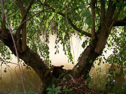 FOTKA - cestou na kole-průhonický park_strom u vody