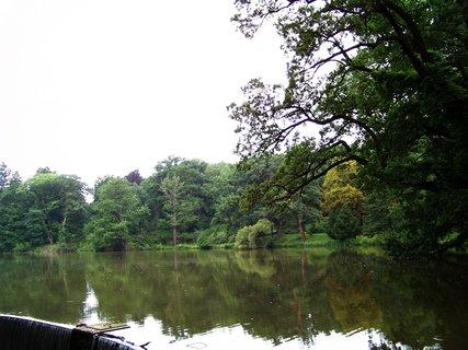 FOTKA - stromy u rybníka v průhonickém parku
