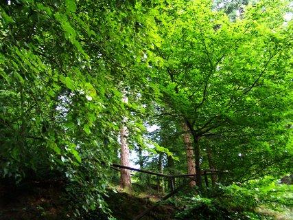 FOTKA - příroda v průhonickém parku ..,