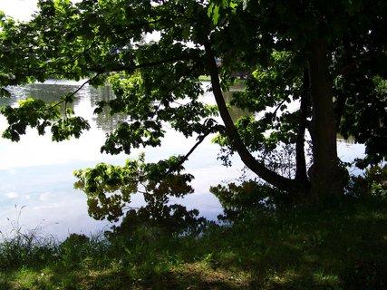 FOTKA - rybník Šeberák v Kunraticích_strom u břehu