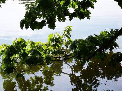 FOTKA - rybník Šeberák v Kunraticích_větve opírající se o hladinu