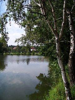 FOTKA - rybník Šeberák v Kunraticích_břízky u břehu