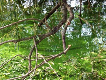 FOTKA - brčál u břehu pod stromem_Šeberák