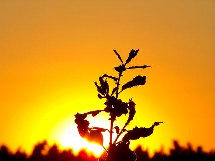 FOTKA - Zlatá obloha