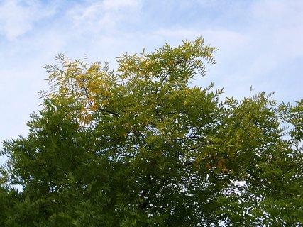 FOTKA - u rybníku Ohrada, Kunratice_vrcholky stromů