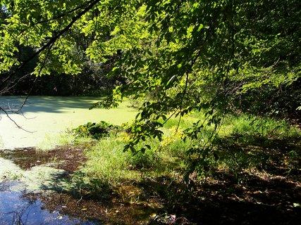 FOTKA - rákosníčkův rybník
