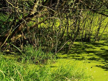 FOTKA - všude zelená .....
